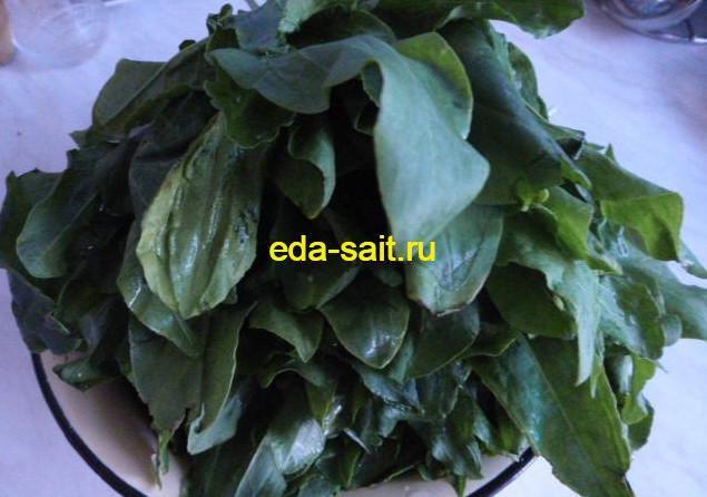 Заготовка зелени щавеля
